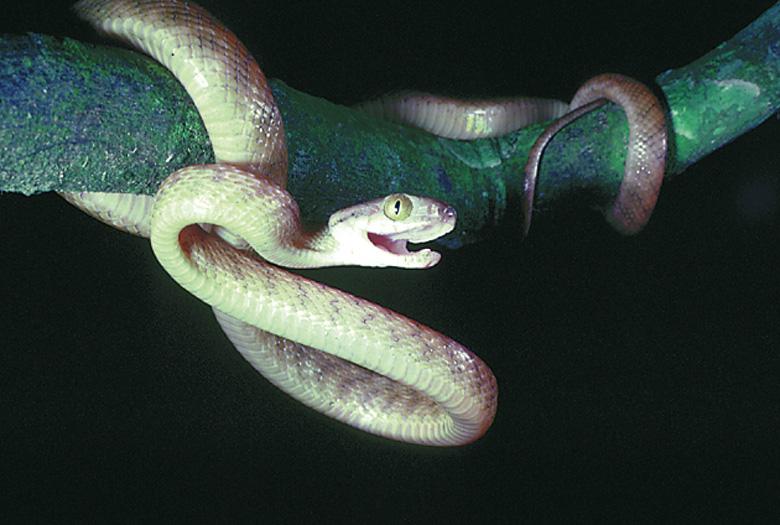 фото змеи с шариком на хвосте ними можно снова
