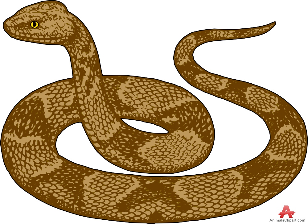 Brown Tree Snake clipart #3, Download drawings