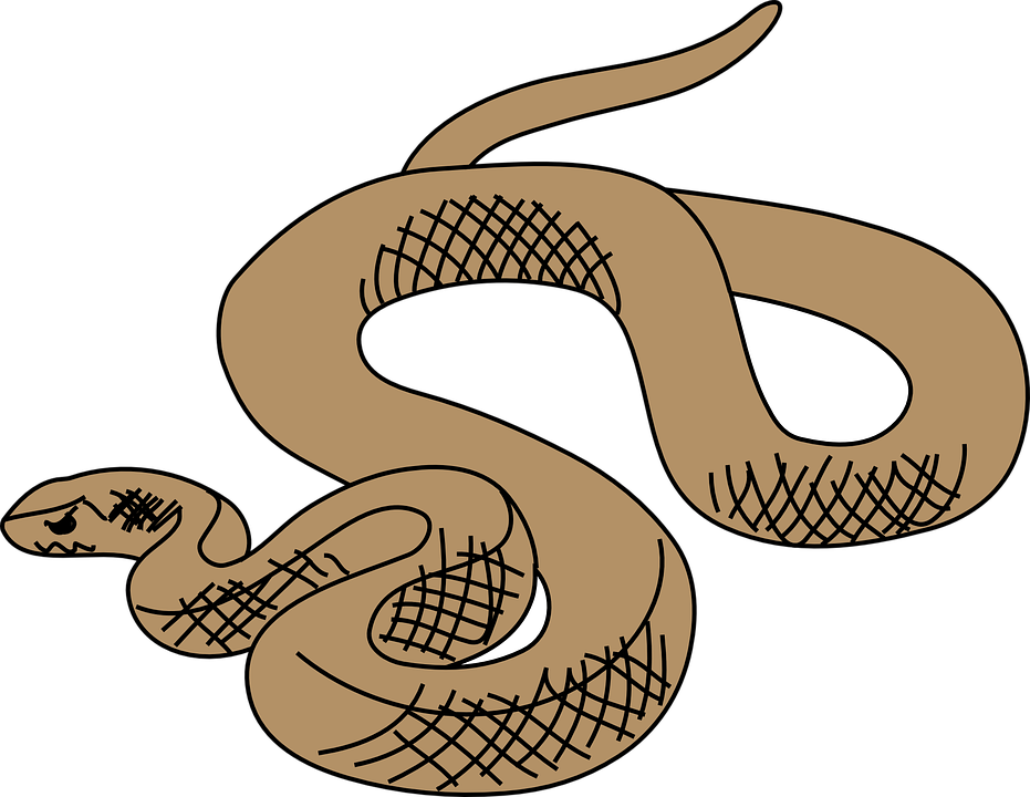 Brown Tree Snake clipart #15, Download drawings