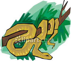 Brown Tree Snake clipart #1, Download drawings