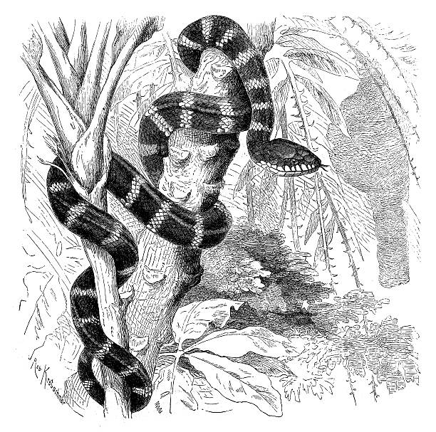 Brown Tree Snake clipart #13, Download drawings
