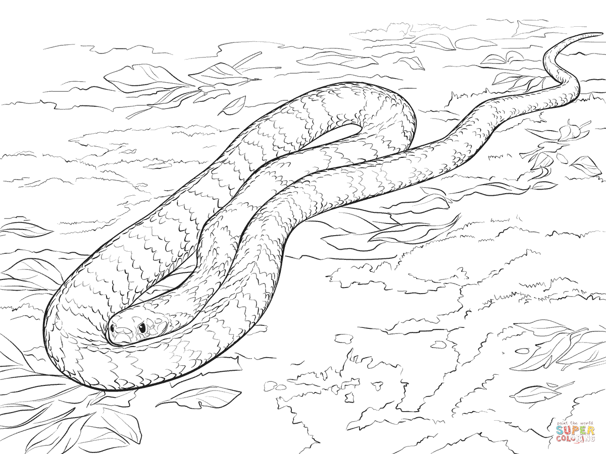 Brown Tree Snake coloring #6, Download drawings