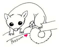 Brushtail Possum clipart #15, Download drawings