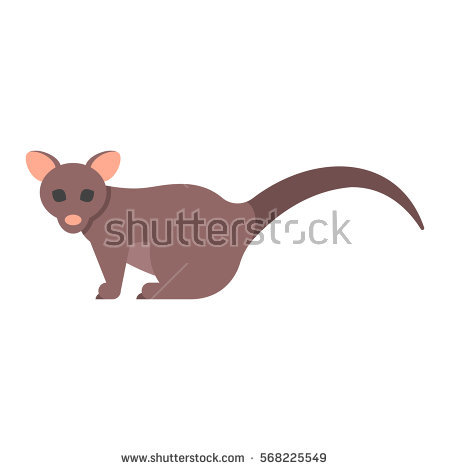 Brushtail Possum clipart #3, Download drawings
