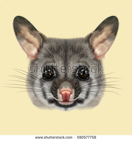 Brushtail Possum clipart #14, Download drawings