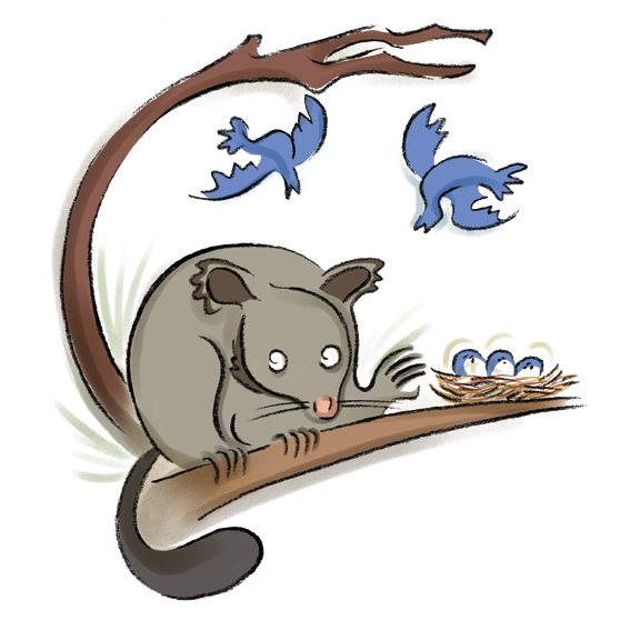 Brushtail Possum clipart #2, Download drawings