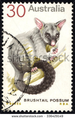Brushtail Possum clipart #5, Download drawings