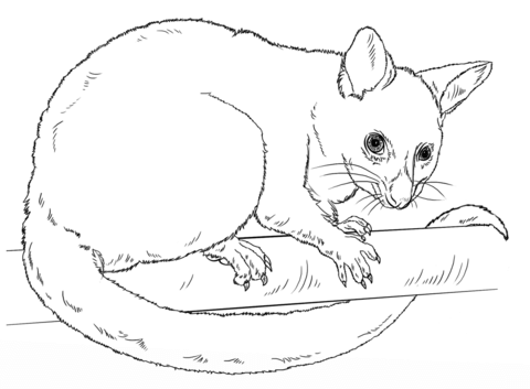 Brushtail Possum clipart #6, Download drawings
