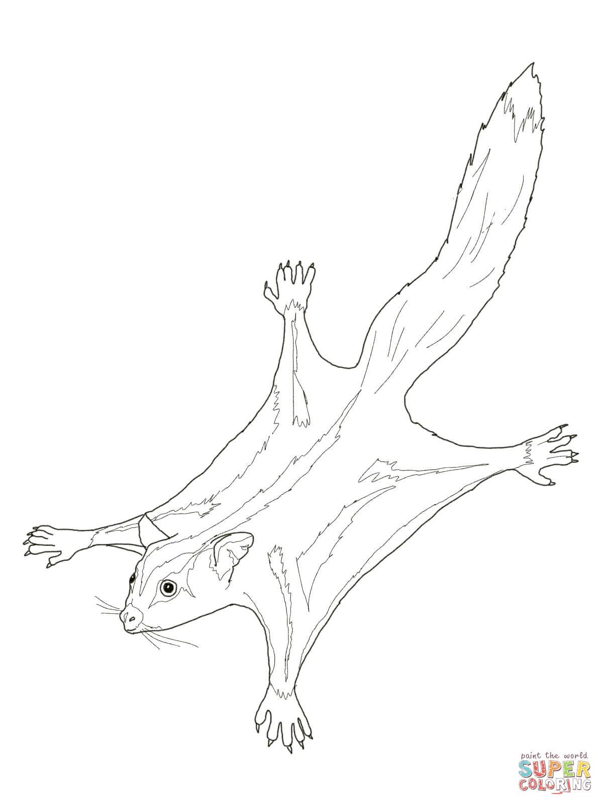 Cuscus coloring #11, Download drawings