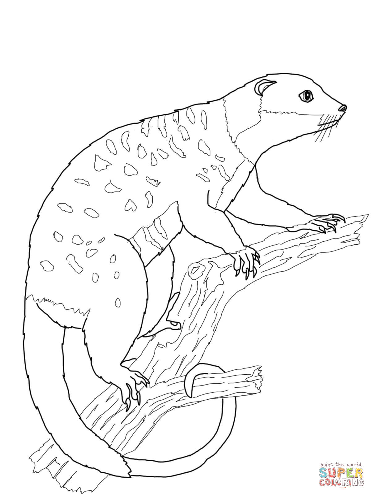 Cuscus coloring #9, Download drawings