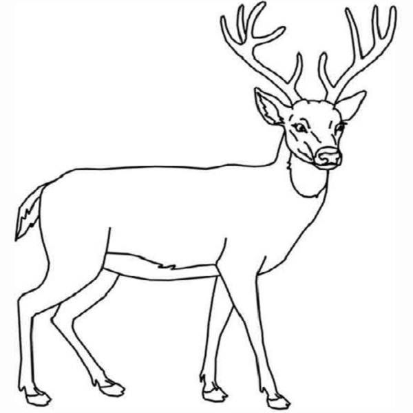 coloring pages and deer - photo#38