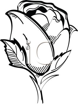 Bud clipart #8, Download drawings