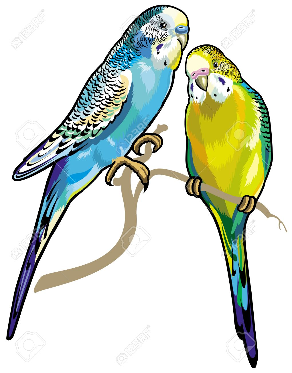Parakeet clipart #18, Download drawings