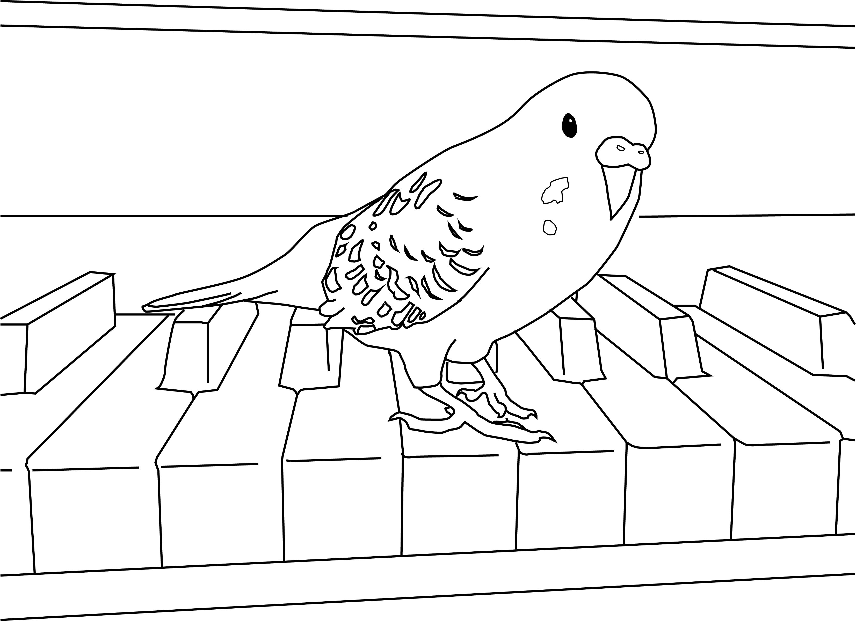 Parakeet coloring #13, Download drawings