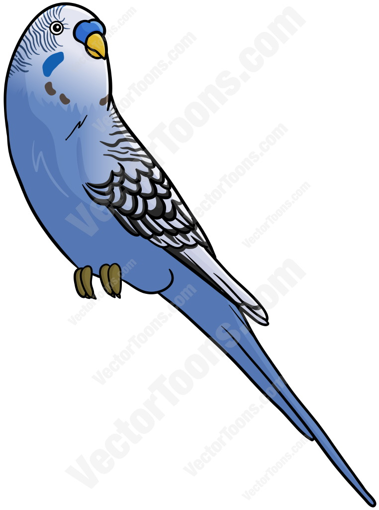 Budgerigars clipart #4, Download drawings