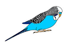 Budgerigars clipart #16, Download drawings