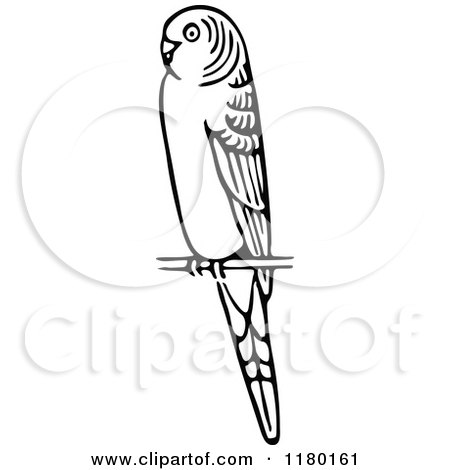 Budgerigars clipart #9, Download drawings