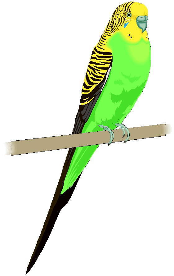 Budgerigars clipart #5, Download drawings