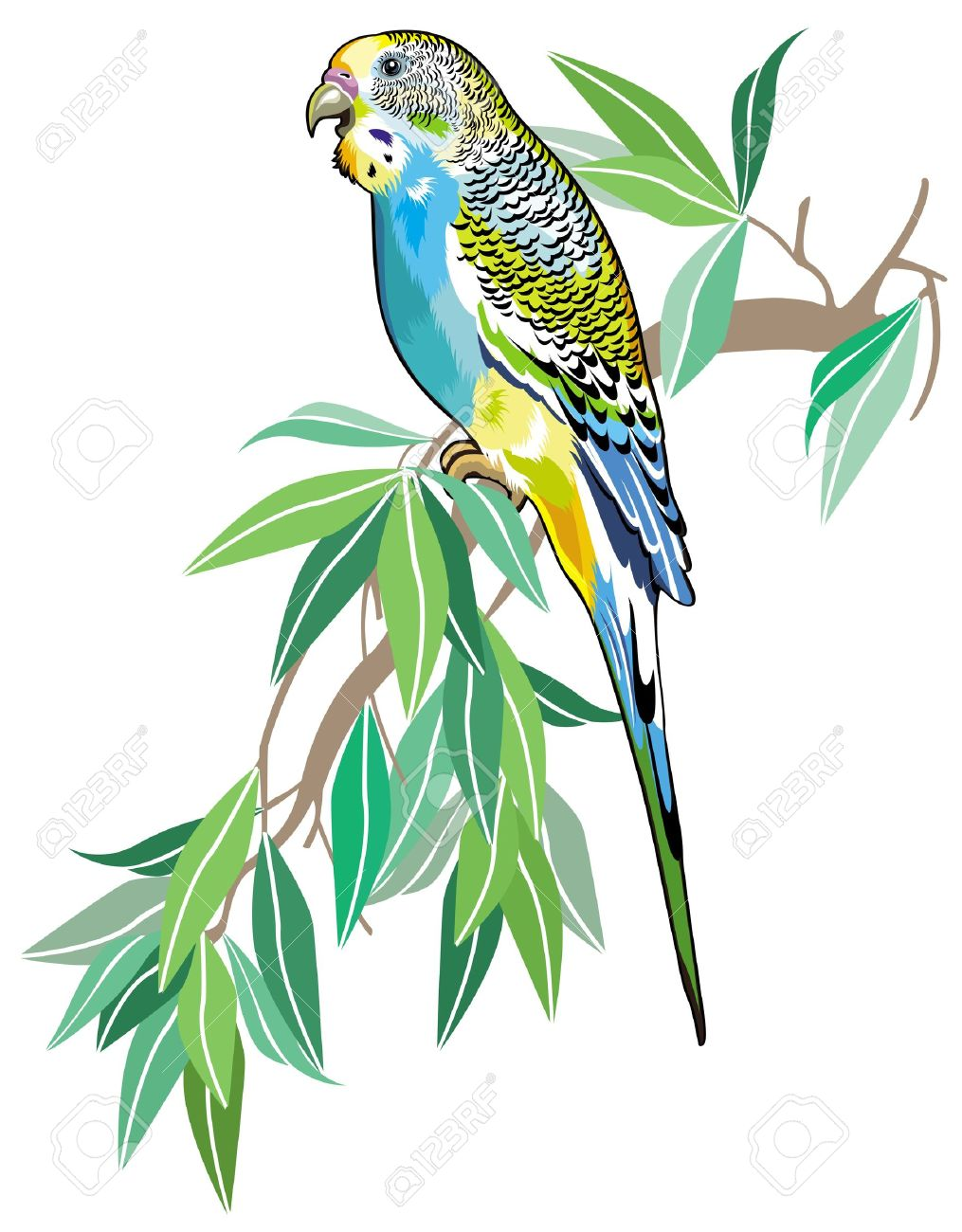 Budgerigars clipart #2, Download drawings