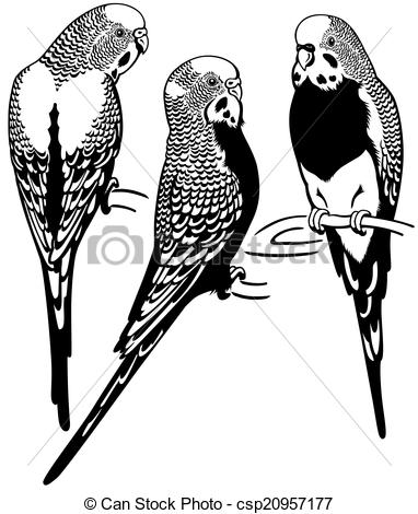 Budgerigars clipart #14, Download drawings