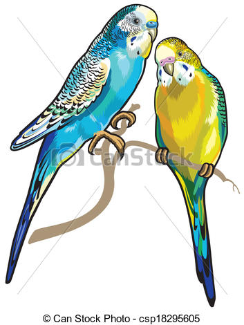 Budgerigars clipart #12, Download drawings