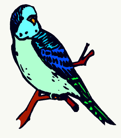 Budgie clipart #8, Download drawings