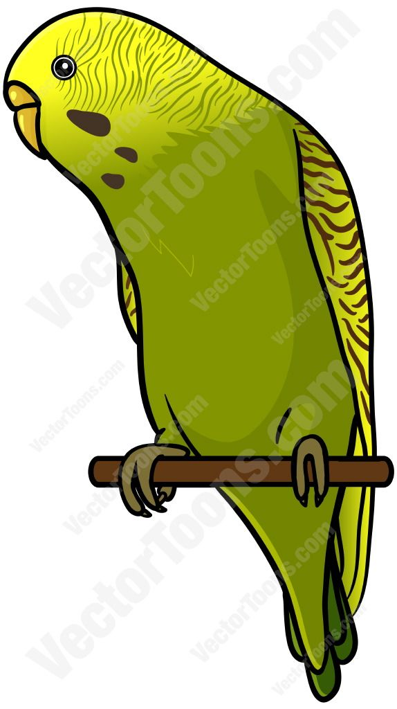 Budgie clipart #7, Download drawings