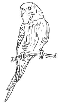 Budgie clipart #6, Download drawings