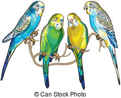 Budgie clipart #11, Download drawings
