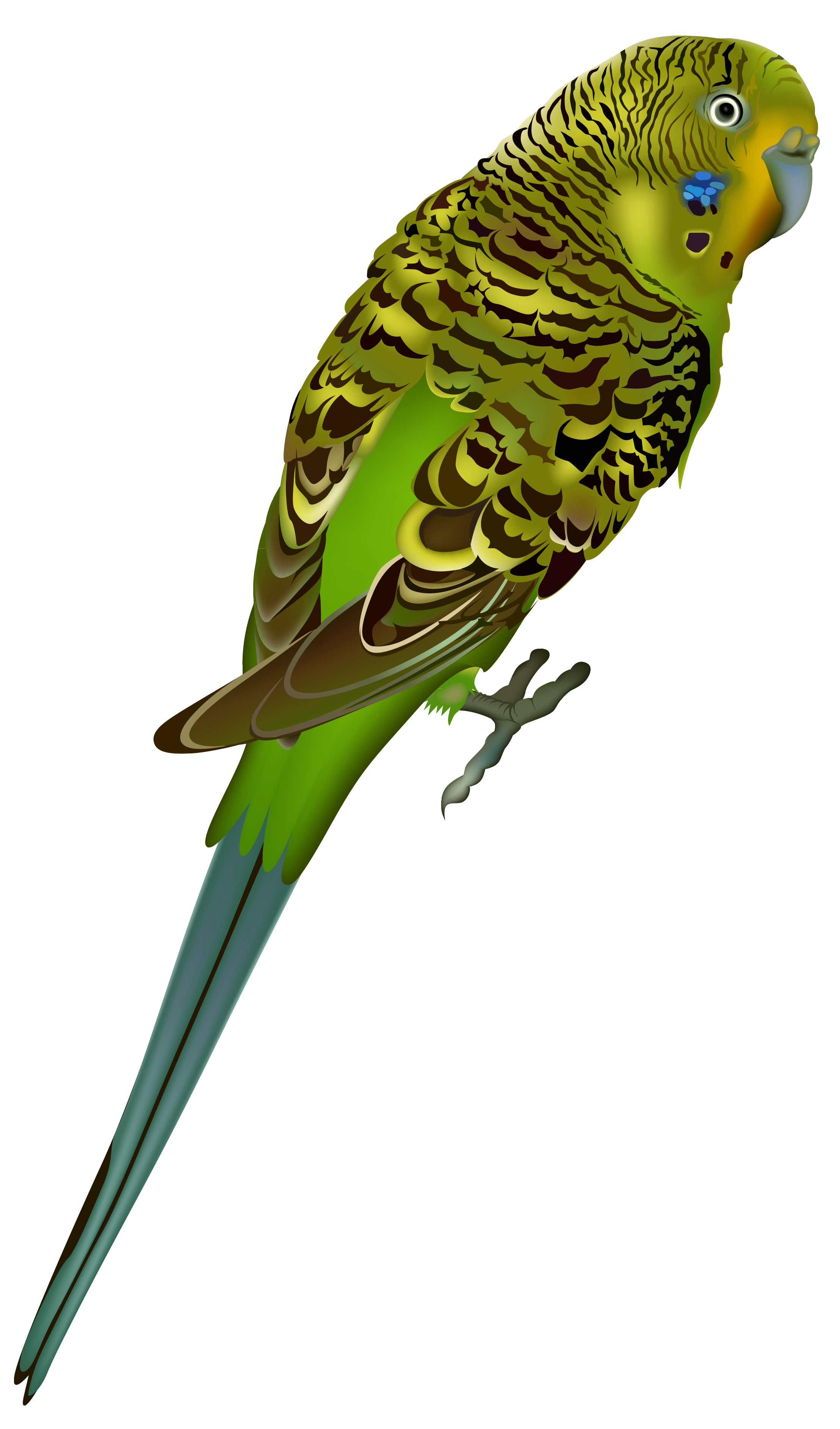 Budgie clipart #1, Download drawings