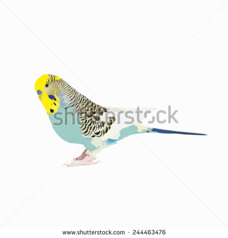 Budgie svg #15, Download drawings