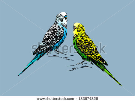 Budgie svg #2, Download drawings