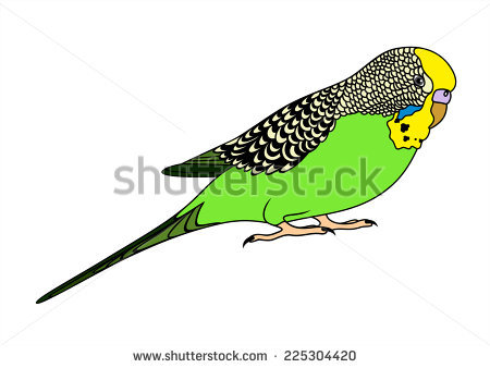 Budgie svg #18, Download drawings
