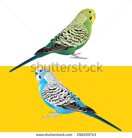 Budgie svg #14, Download drawings