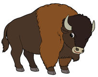 Buffalo clipart #11, Download drawings
