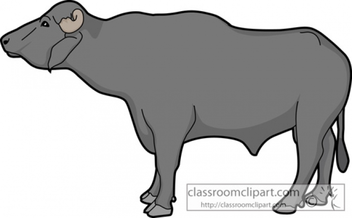 Buffalo clipart #19, Download drawings