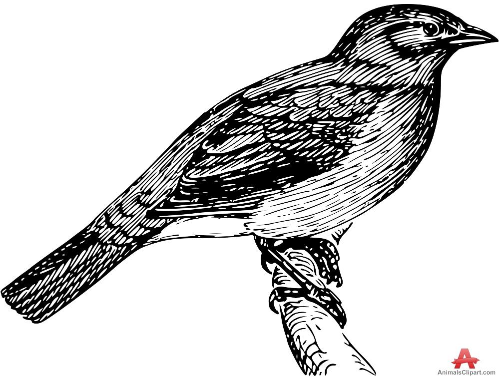 Bulbul clipart #6, Download drawings