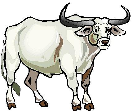 Bulls clipart #18, Download drawings