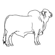 Bull coloring #7, Download drawings