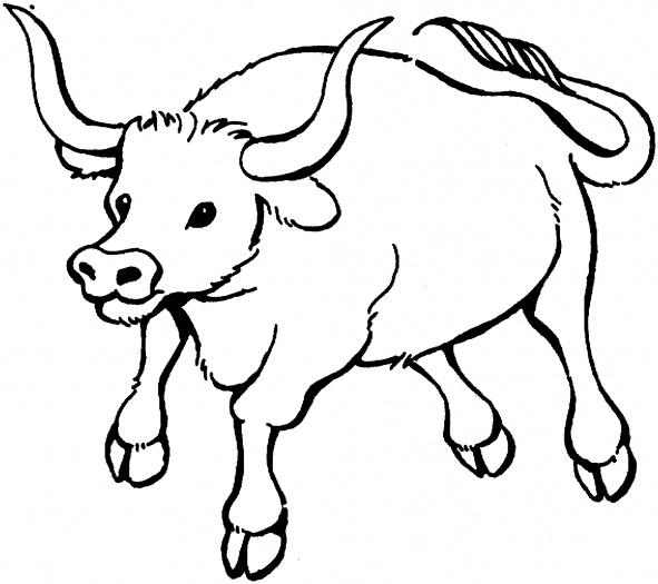 Bull coloring #6, Download drawings