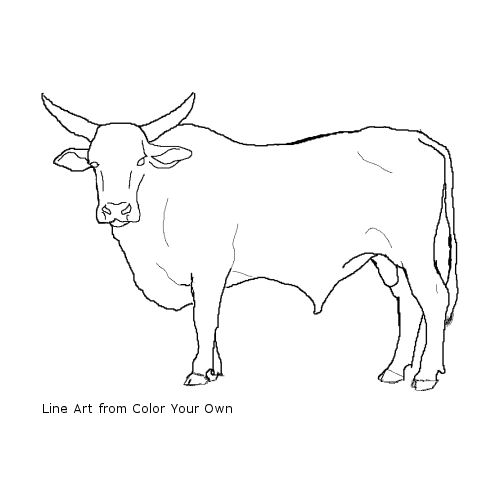 Bull coloring, Download Bull coloring for free 2019