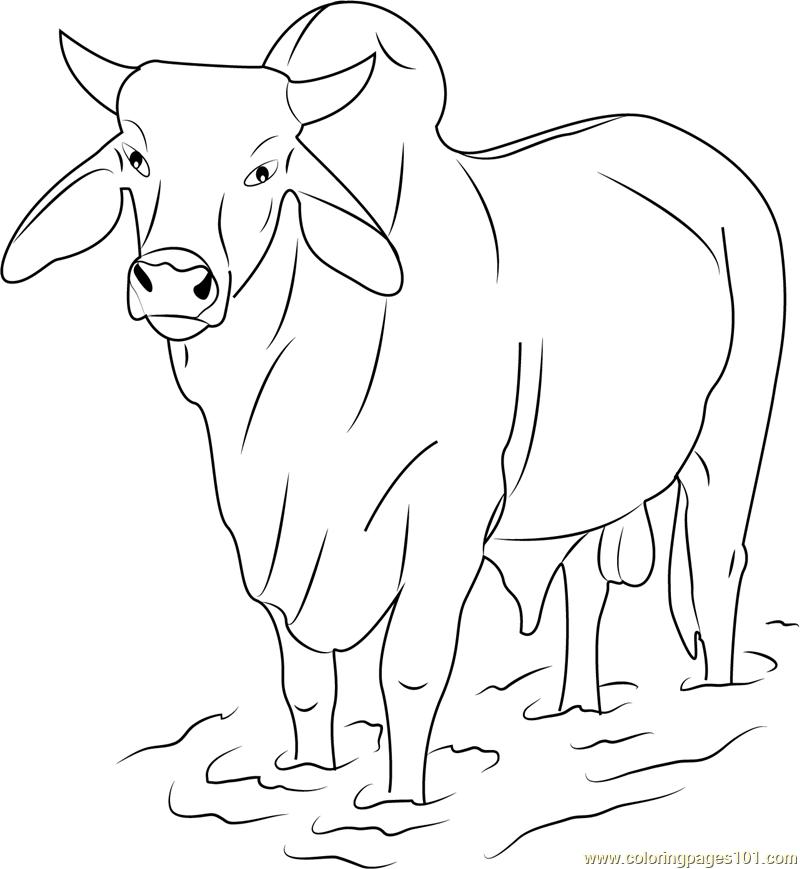 Bull coloring #8, Download drawings