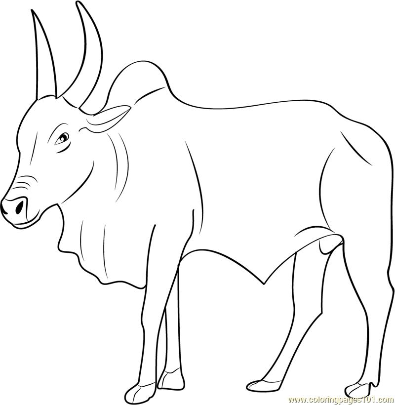 Bull coloring #15, Download drawings