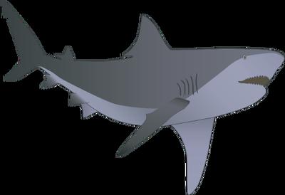 Bull Shark svg #20, Download drawings