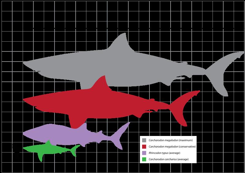 Bull Shark svg #10, Download drawings