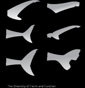 Bull Shark svg #11, Download drawings