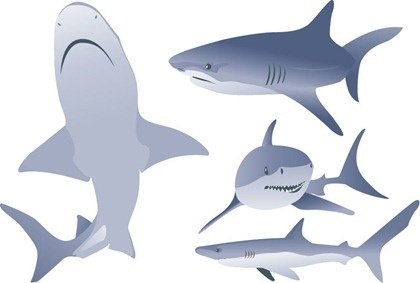 Great White Shark svg #15, Download drawings