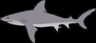 Bull Shark svg #18, Download drawings