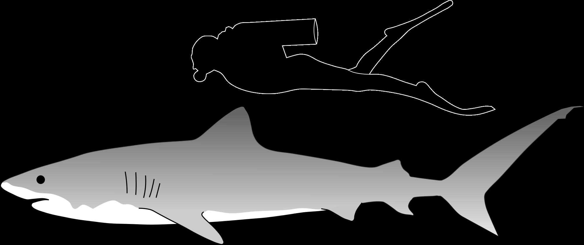Bull Shark svg #15, Download drawings