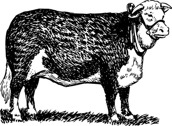 Bull svg #529, Download drawings